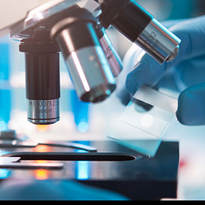 NPL and Vironova announce collaboration to further UK life science research